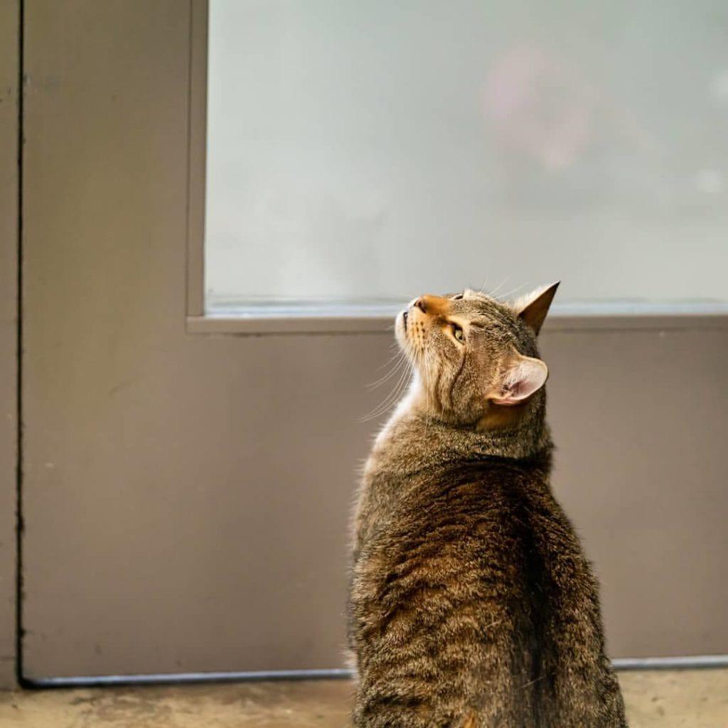 quilty chat refuge roi de l'évasion adoption